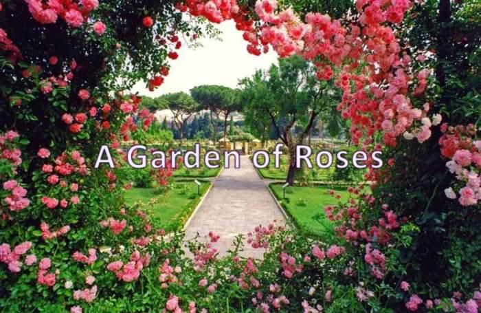 A Garden of Roses.jpg